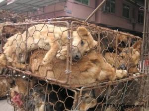 Hunde in engem Käfig