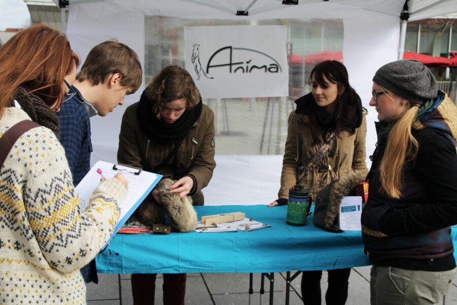 Anima-Mitglieder zeigen Passanten an einem Pelz worauf man achten muss