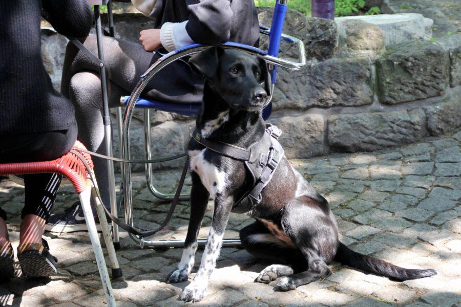 Ein Hund sitzt in der Sonne