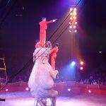 Elefant im Zirkus Charles Knie - Verbot von Zirkussen mit Wildtieren in Dresden