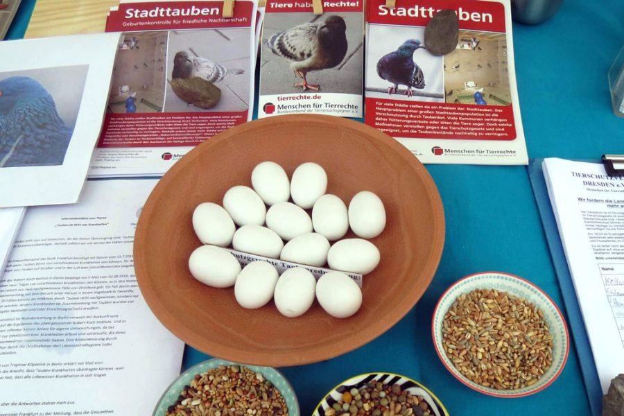 Tierschutz auf dem Familienfest zum 01. Mai - Infomaterial zu Stadttauben