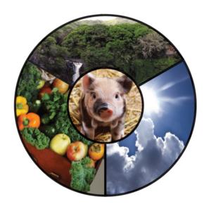 Rundes Bild in dem in der Mitte ein Schwein zu sehen ist. Oben ist ein Wald dargestellt, links unten Obst und Gemüse und rechts unten der Himmel mit Wolken.